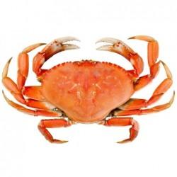 Crabes (1Kg)