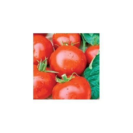 Tomate tas