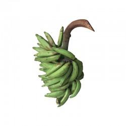 Moyen régime de plantain